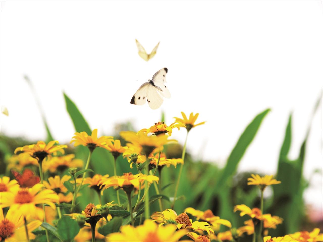 和暦〜自然と共に生活を営んできた日本人の美しい暦