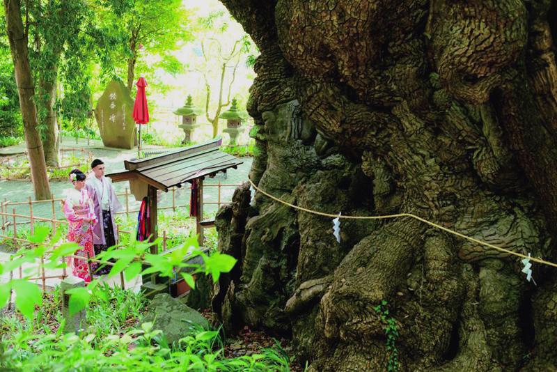 熱海の誇り&#160;來宮神社<br>名高いパワースポットでふたりの永遠を誓う