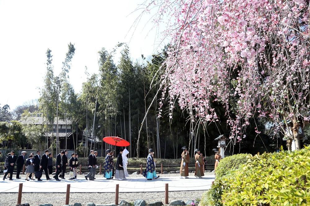 日本人が好きな花ランキング第1位のパワーが宿る神社